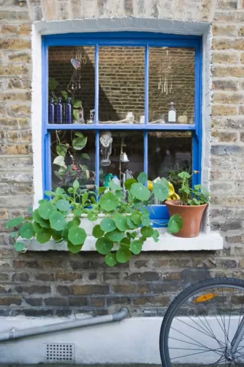 This True Blue Window Invites a Look Inside