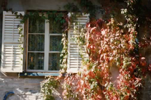 A Vine-Covered Cottage with Pastoral Windows Tugs at the Heartstrings